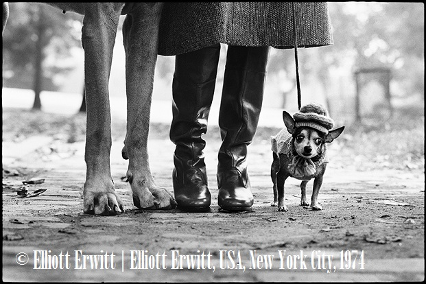 ELLIOTT ERWITT. FAMILY al Mudec Photo Milano