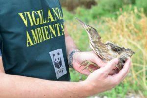 Serradifalco: Concluso il monitoraggio della Riserva Lago Soprano a cura dei volontari WWF
