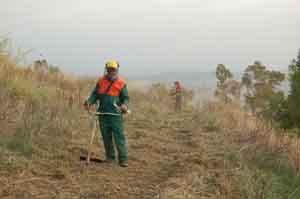 Regione Sicilia non ha i soldi per garantire ai forestali 101 giornate