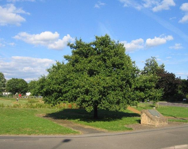 I sette aiutanti di Bach: Oak