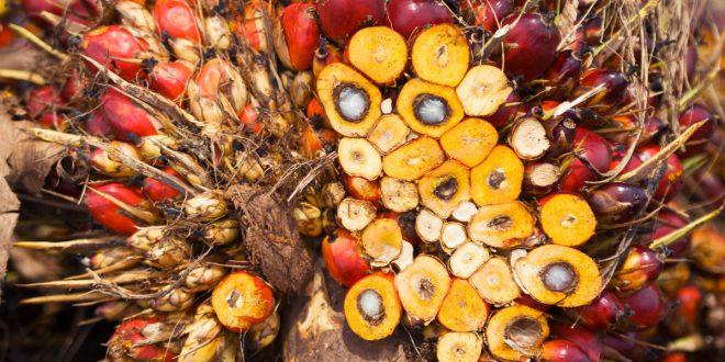 Olio di palma: miti e realtà