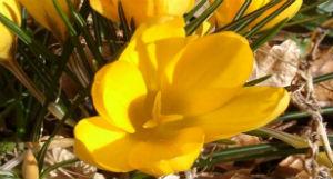 Villarosa. Alunni piantano bulbi di Crocus recitando commoventi poesie in memoria dei bambini ebrei