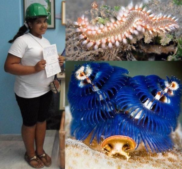 Cuba: Grethel, piccola biologa in miniatura e la sua ricerca sui Policheti