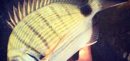 La passione per la pesca non va mai in vacanza!