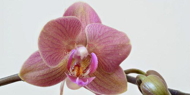 Orchidee: maestre di evoluzione