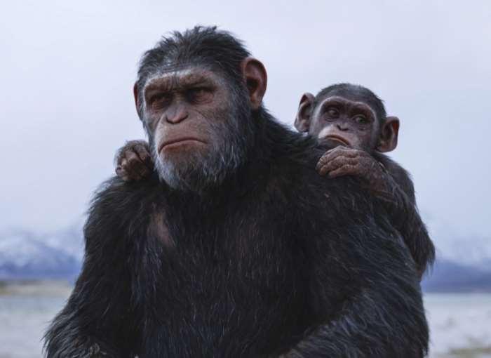 20th Century Fox sostiene l'Istituto Jane Goodall per la riabilitazione degli scimpanzé in occasione dell'uscita di The War