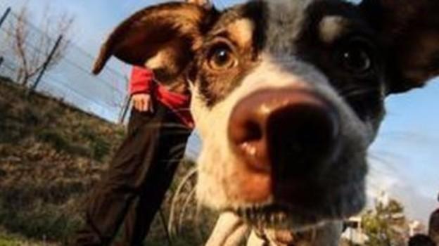 Macabra dissaventura accaduta ad una signora di Imola e al suo cane