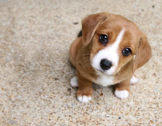 Parlare con un cuccuiolo di cane funziona
