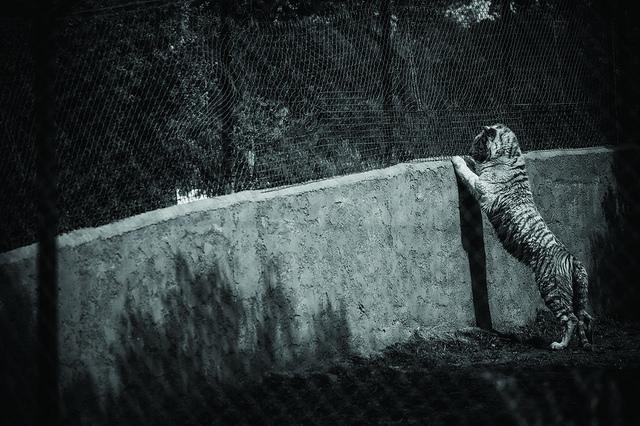 Le tristi foto delle condizioni degli animali negli zoo europei