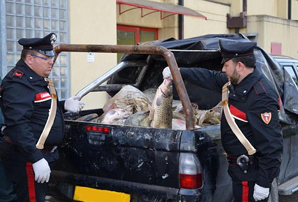 Muzza: Maxi sequestro di pesce, 5 denunce per pesca di frodo