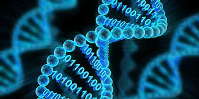 il genoma è un computer quantico