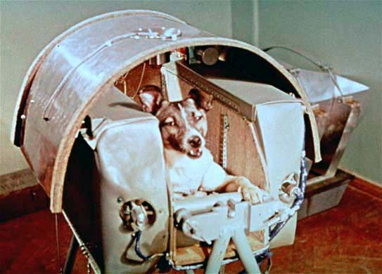 3 novembre 1957: Laika viene imbarcata sullo Sputnik 2