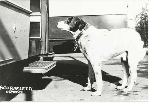 9 giugno 1958: Muore Fido, esempio di fedeltà