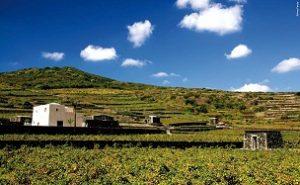 La Sicilia e i suoi vini protagonisti nell'incontro dell'Accademia dei Georgofili