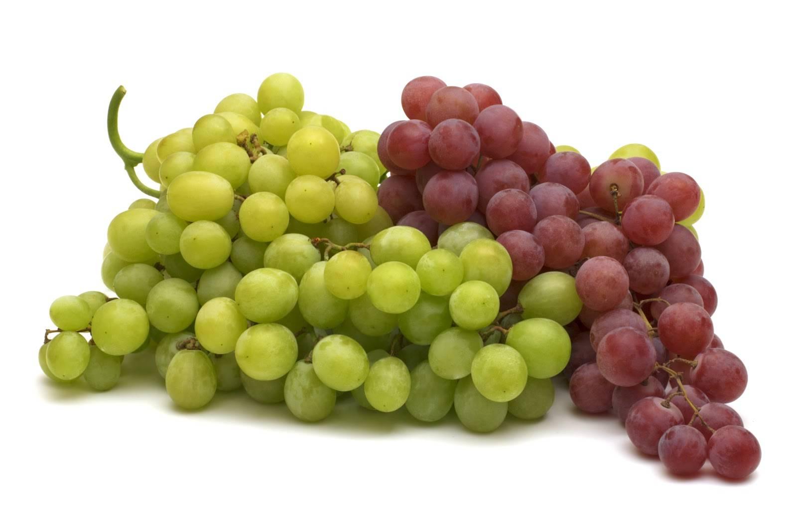 Mangiare l'uva aiuta a prevenire l'Alzheimer