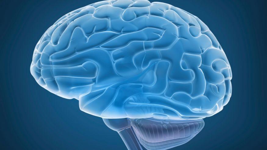 Cervello, trovata un'area che continua a crescere chiamata circonvoluzione fusiforme
